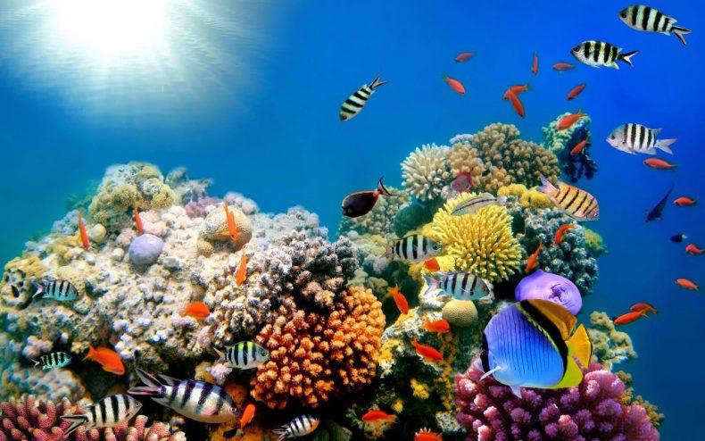 Anuncian primer mapa de arrecifes de coral del Caribe hecho en RD